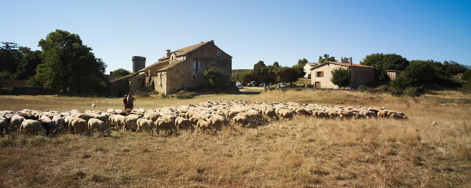 Journée groupe avec visite de ferme sur le Causse du Larzac