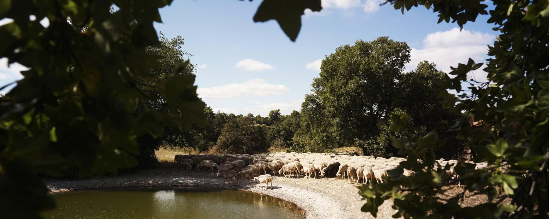 Journée groupe sur l'agropastoralisme et le Causse du Larzac
