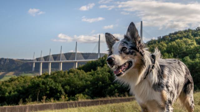 Emmène ton chien à Millau en Aveyron - destination Dog friendly