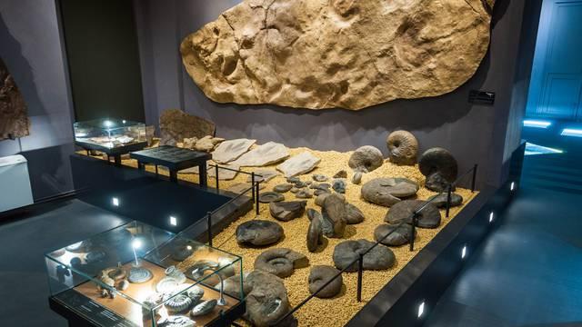 Collection d'ammonites au Musée de Millau