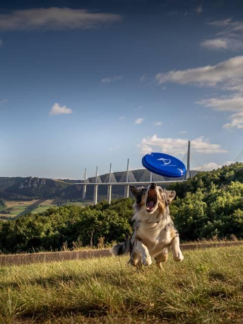 L'AIRE DU VIADUC – UN ESPACE LOISIRS 100% DOG FRIENDLY !