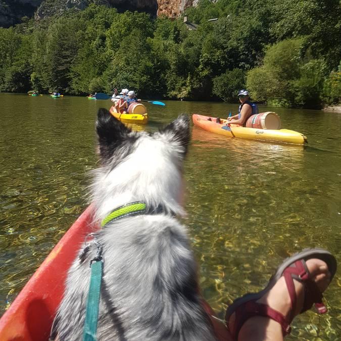 Descente en canoë avec un chien