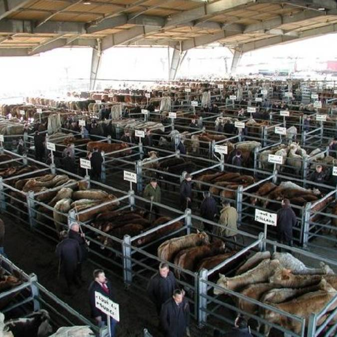 Le marché aux bestiaux de Laissac