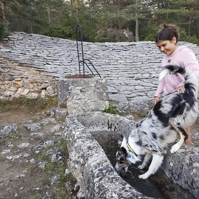 Stingy et le Cani-patrimoine