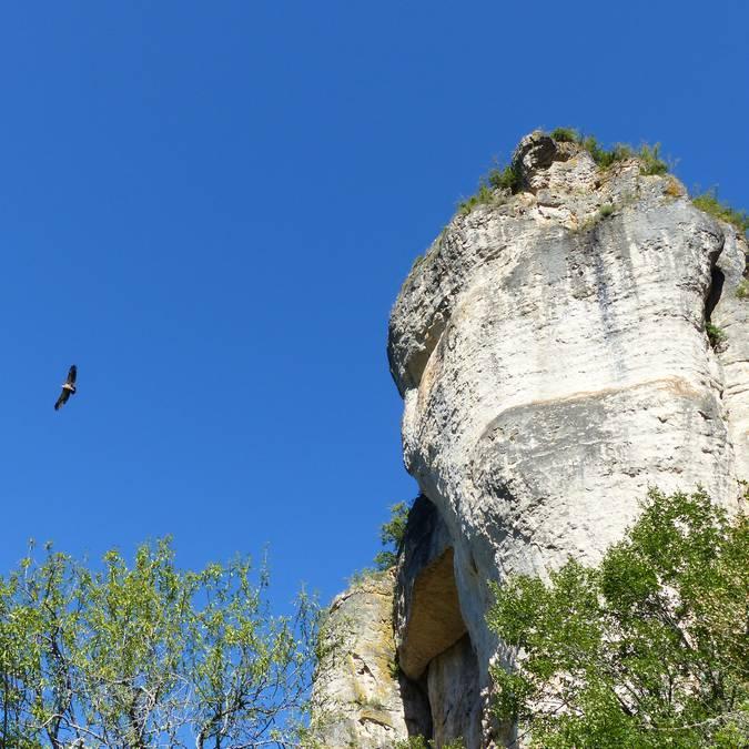 Journée groupe pour observer le vol majestueux des vautours dans les Gorges de la Jonte