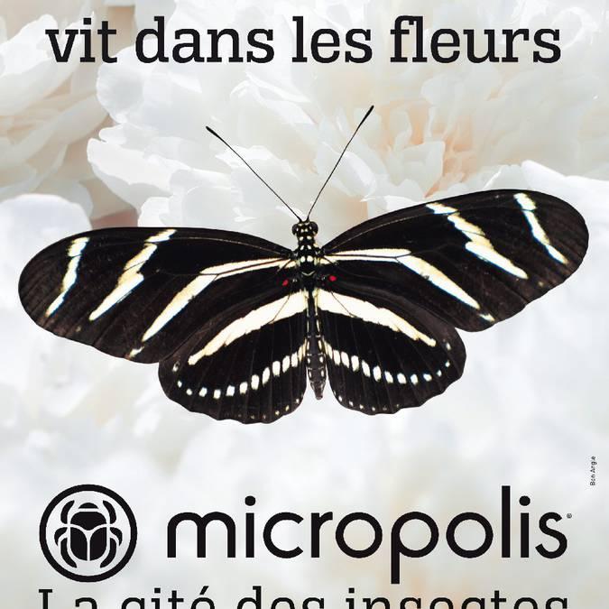 Micropolis : La Cité des insectes